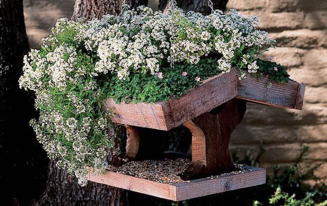 Easy to build Bird Feeder with free plans.