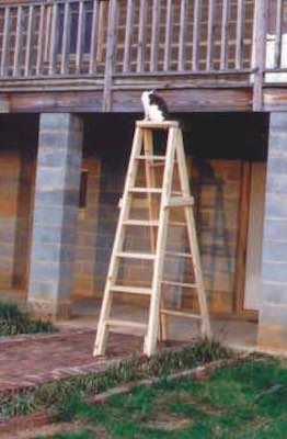 Free plans to build an All Purpose Ladder.