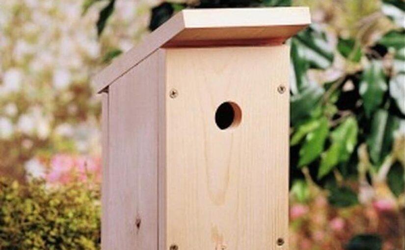 Birdhouse for Beginners