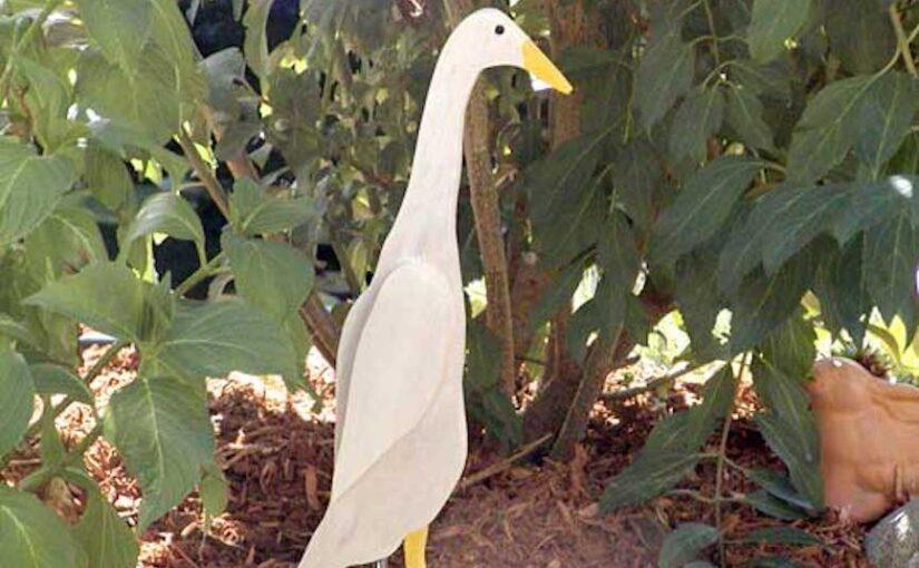 Wooden Runner Duck