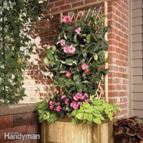 Build a Bamboo Planter with Trellis using free plans.