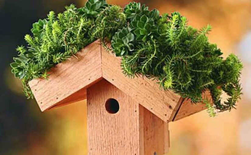Green Roof Birdhouse