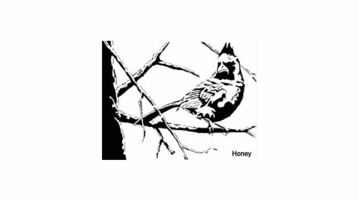 scroll saw,birds,cardinals,free woodworking patterns,projects,diy