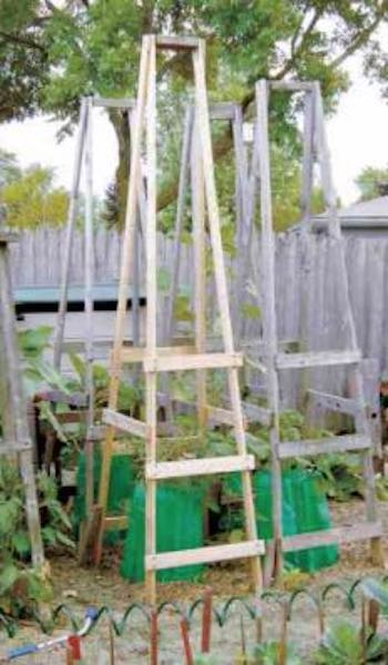 Free plans to build Folding Tomato Cages.