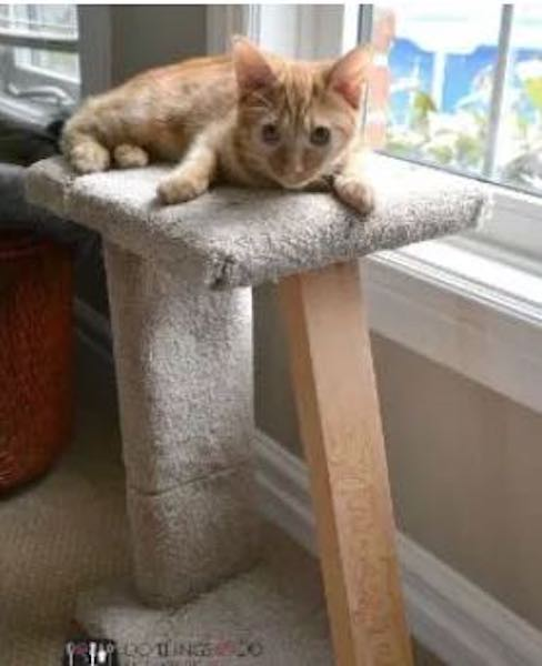 Build a quick Cat Scratching Post using free plans.