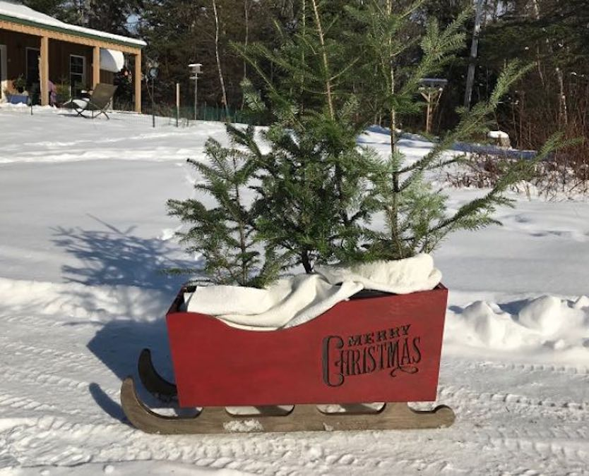 Build a Christmas Sleigh For Decor using free plans.
