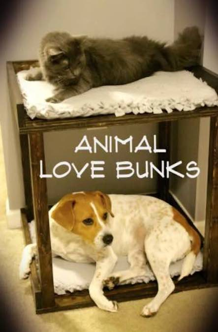 Build a space saving Pet Bunk Bed using free plans.