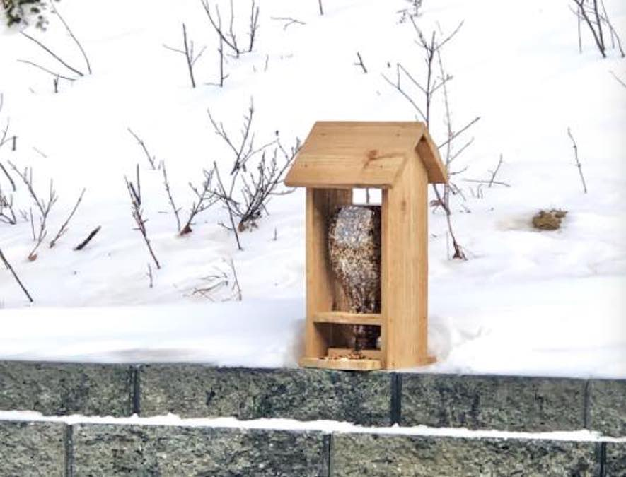 Free plans to build a bird feeder for your backyard.