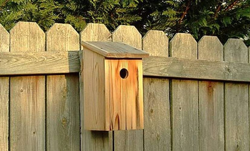 Build a Basic Birdhouse