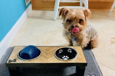 Build a Plywood Pattern Dog Bowl Stand using free plans.