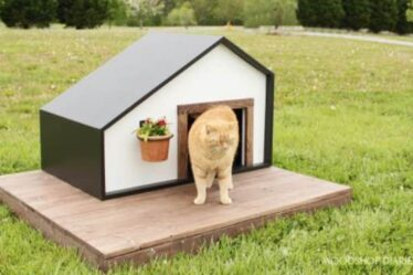 Build an Outdoor Pet House using free plans.